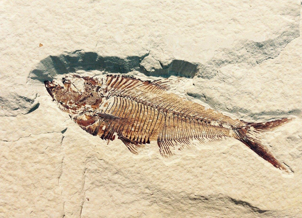 Fossielen vervalsingen