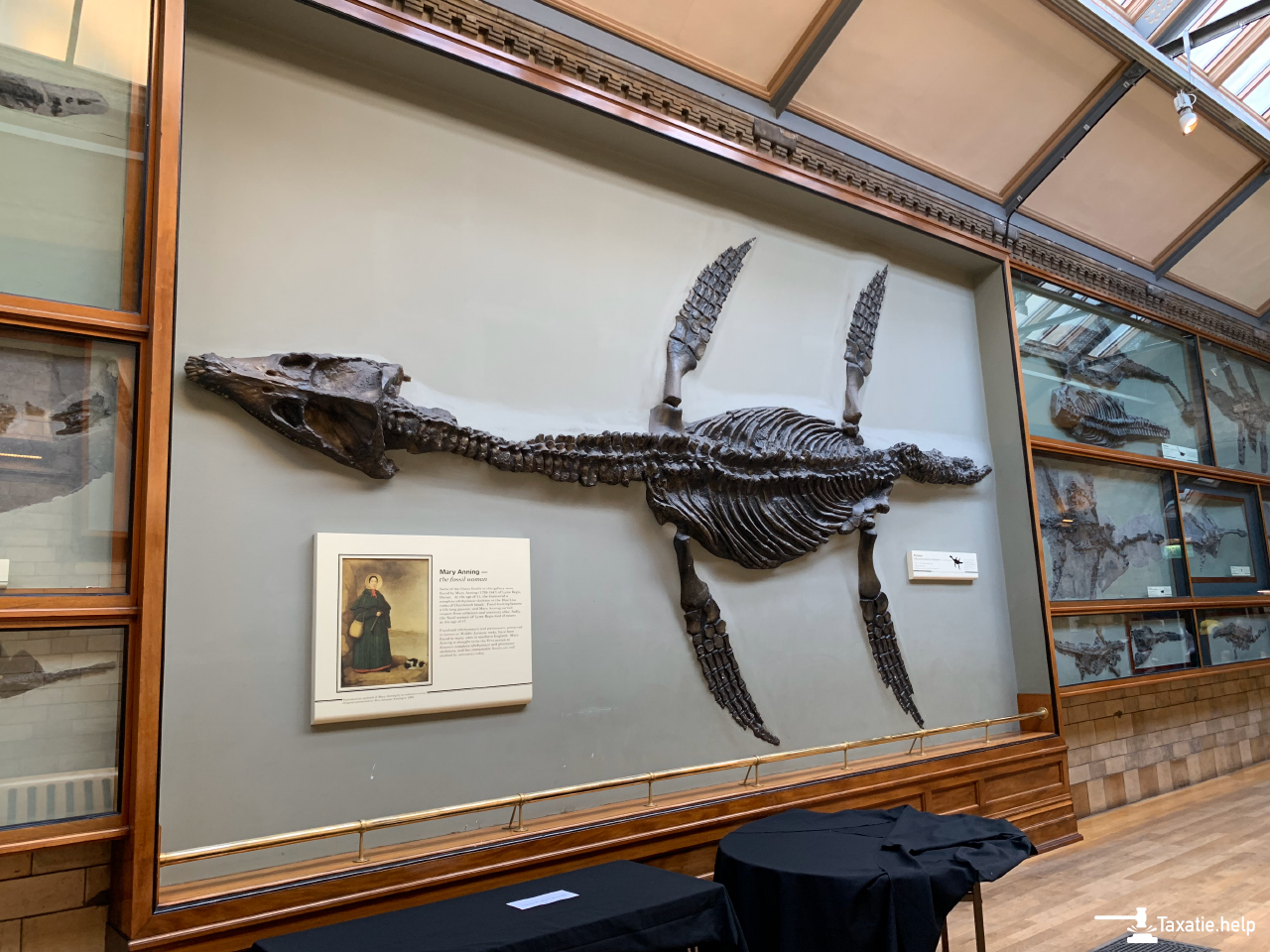 Fossielen taxeren en opzetten