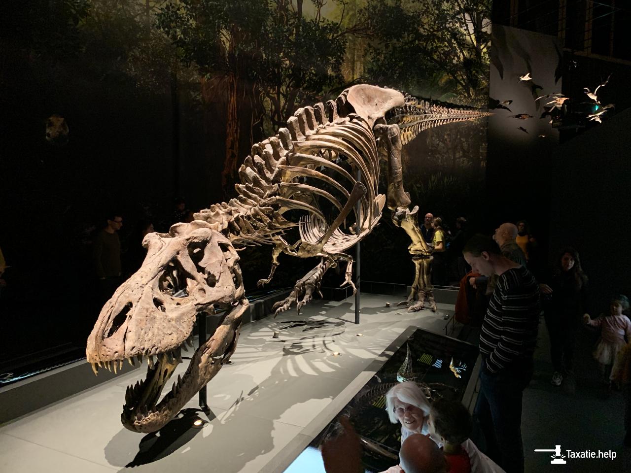 Tyrannosaurus rex fossiel Naturalis